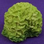 Coral verde mediano